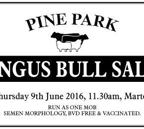 Pinepark – 9 June 2016