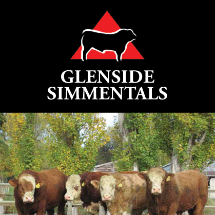 Glenside Simmentals - 25 May 2017