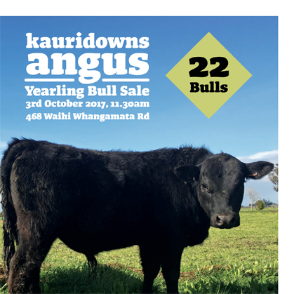 Kauri Downs Angus - 3 October 2017